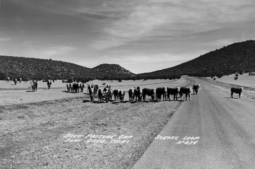 Black and white photo of Beef Pasture Gap on scenic loop near Fort Davis in 1948