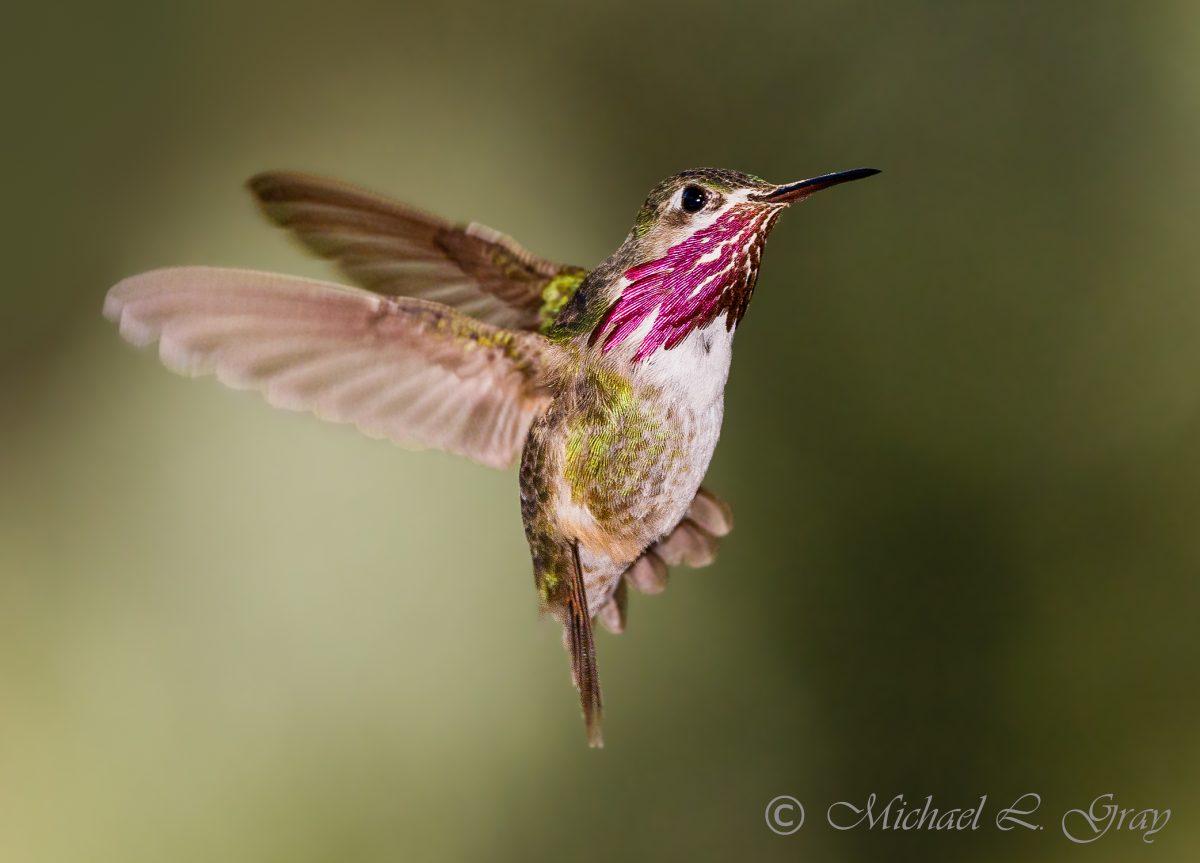 Man Turns Face Into Elaborate Hummingbird Feeder